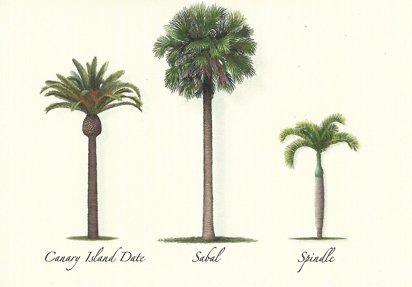 Steven M. Lewers Palm Tree Assortment Boxed Note Cards-- Set of 8