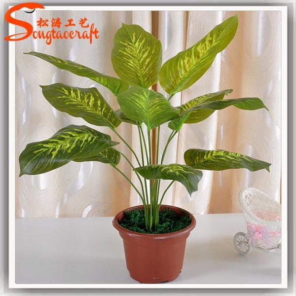 Nomi di piante vasi per le piante di plastica piante for Vendita vasi plastica