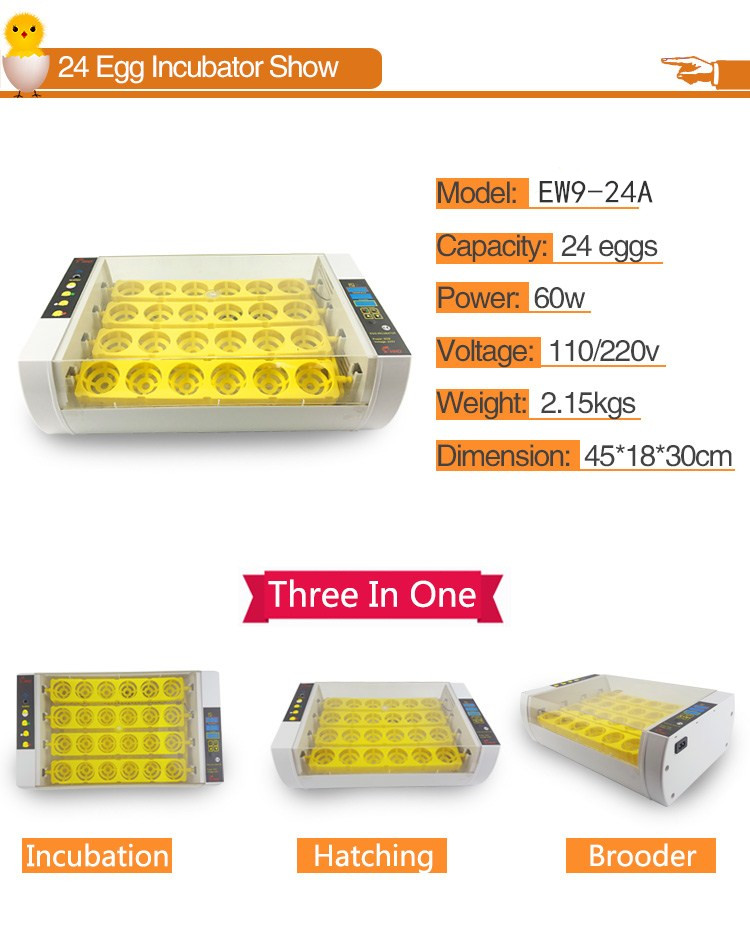 HHD high quality incubator quail eggs poultry machine hatching chicken eggs