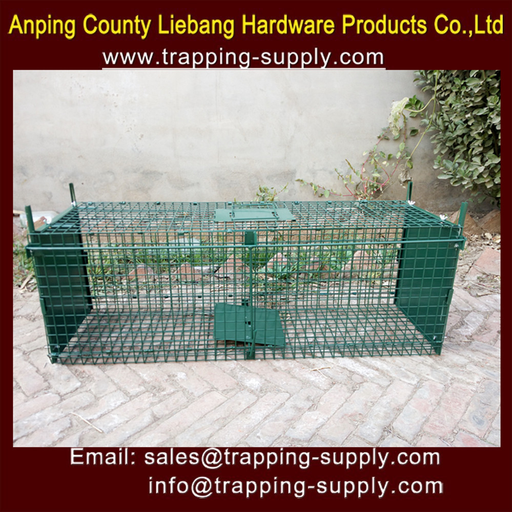 Humane Live Foldable Double Door Powder Painted Green Live Animal Traps for Fox Dog Rabbit Coyote