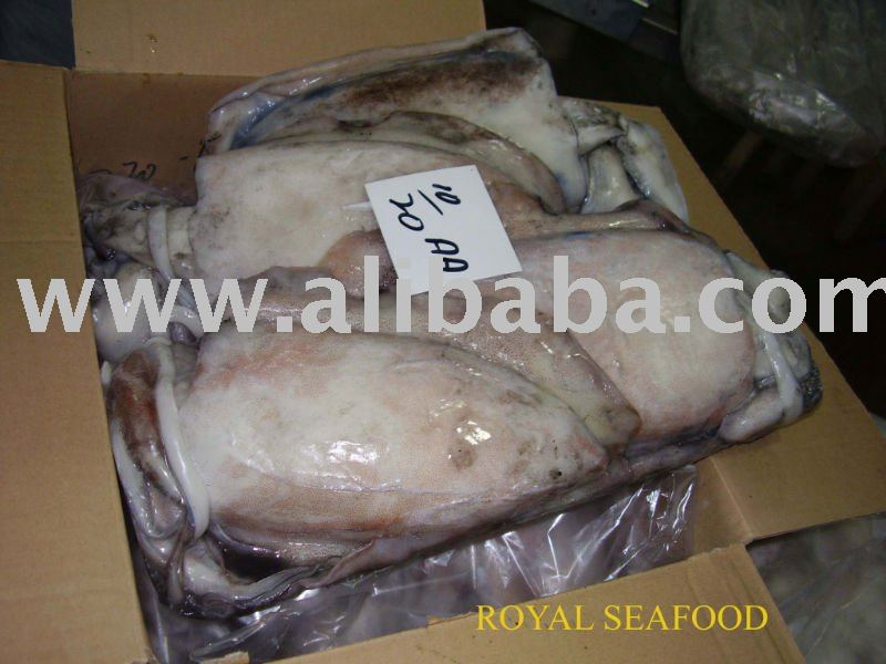 Frozen Cuttle Fish Whole