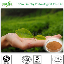 Pure GTP,green tea extract