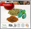 Top quality Natural 25% Yerba mate extract wholesale, Natural Yerba mate extract powder in bulk supply