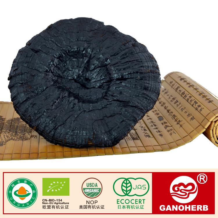 Dried Whole organic Ganoderma Lucidum Sinense Fruiting Body Lingzhi Red organic Reishi Mushroom