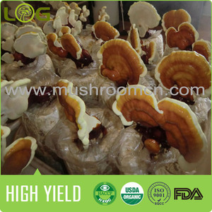 market prices for mushroom cultivation