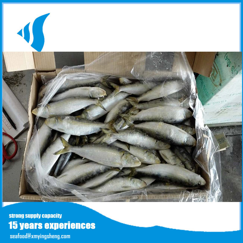 Frozen Sardine fish for tuna bait exported from China for sale