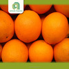 Hot selling mandarin with low price