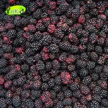 China Frozen IQF Blackberry with Good Quality