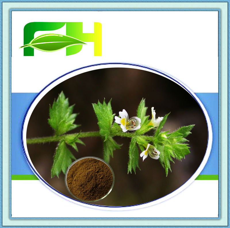 100% Natural Eyebright P.E./3%-10% Flavonoids (HPLC)/Extract Ratio 5:1 10:1