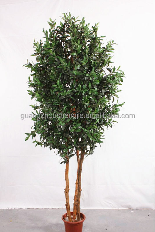 real trunk olive tree artificial plant bonsai tree for wedding
