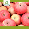 farm fresh plastic bagged fuji apples best price with great price