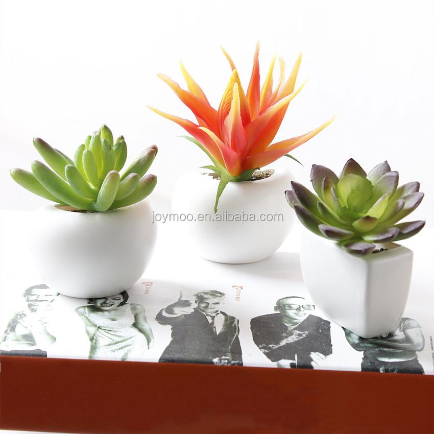 grossiste plantes grasses acheter les meilleurs plantes grasses lots de la chine plantes grasses. Black Bedroom Furniture Sets. Home Design Ideas