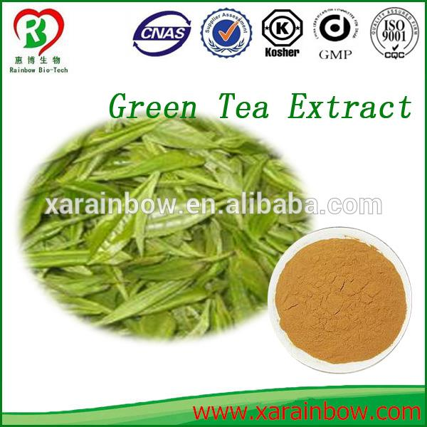 GMP factory supply green tea ext with CE certificate