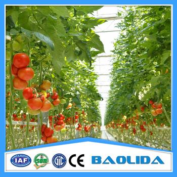 Landwirtschaftliche Hydroponischen Tomaten Gewachshaus Zum Verkauf
