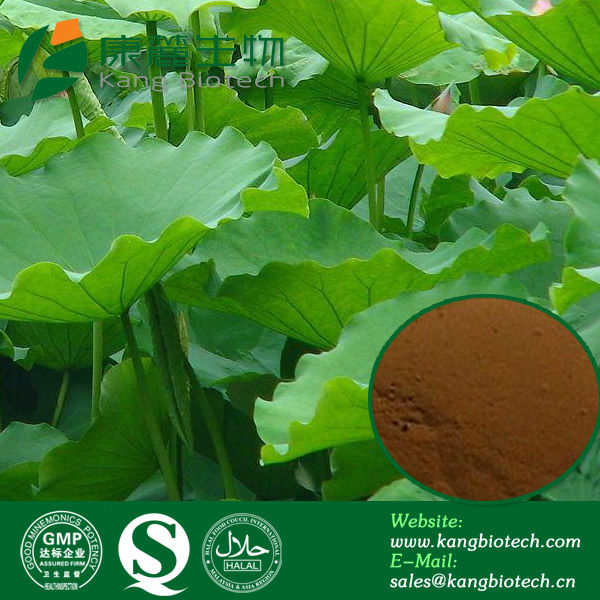 Natural Nuciferine Extract from Dried Lotus Leaf