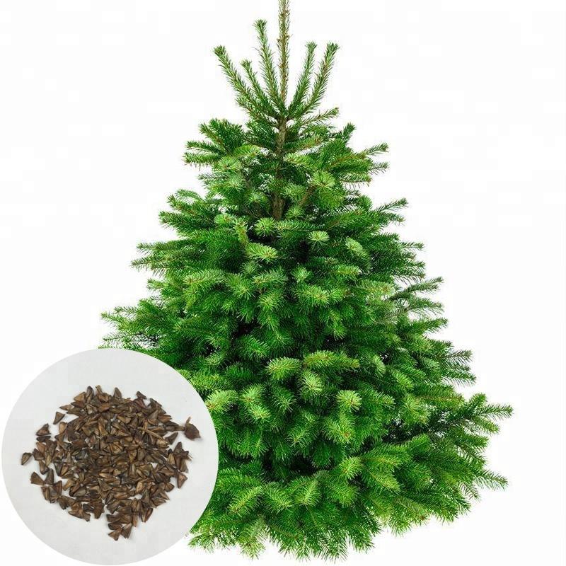 Weihnachtsbaum Samen.Kaufen Sie Mit Niedrigem Preis German Stück Sets Großhandel German