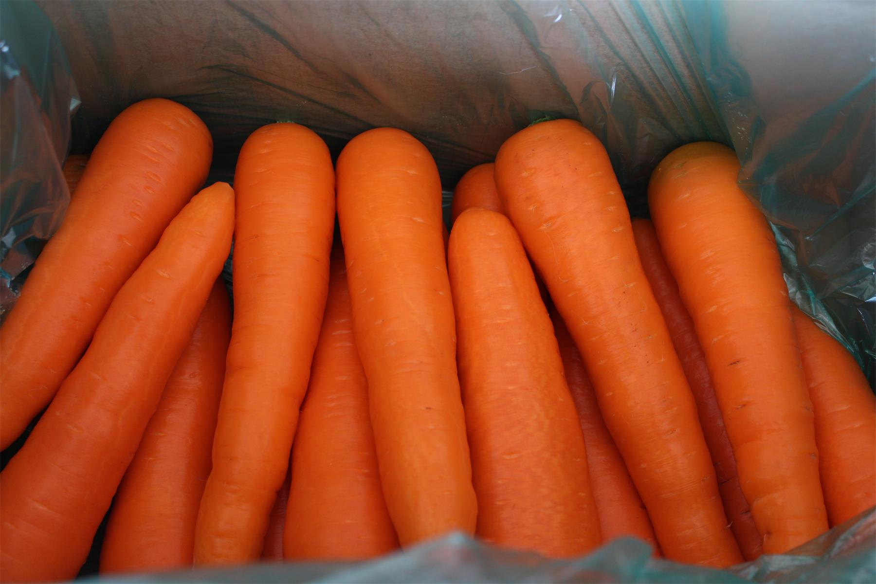 China best shandong Fresh carrot/carrot production