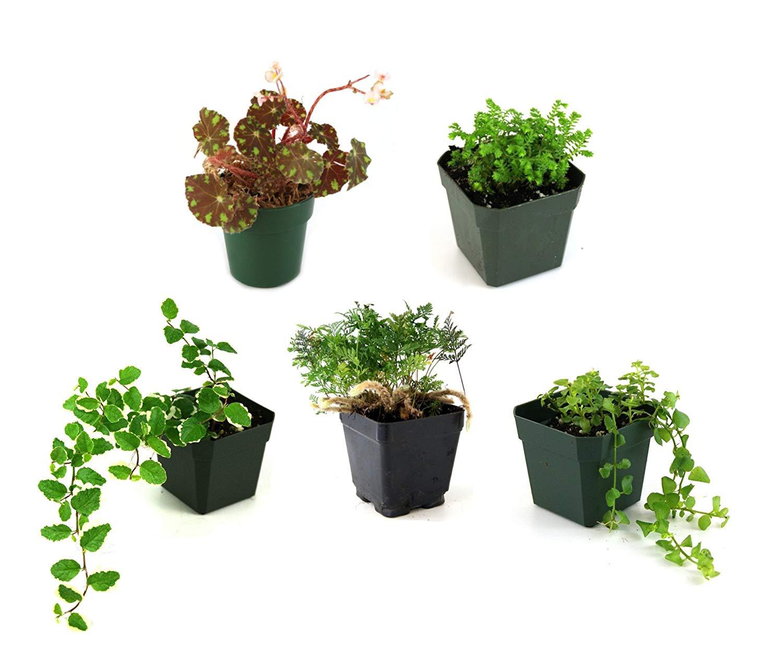 Cheap Mini Terrarium Plants Find Mini Terrarium Plants Deals On