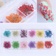 1 Box 3D Real Dried Babysbreath Flower Sticker 12 Colors Nail Art Decoration For Nail Art Tips