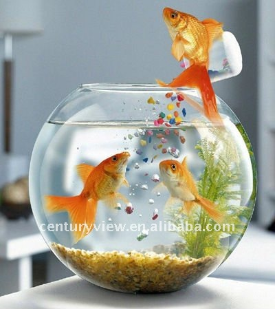 Sfera di vetro boccia di pesci ciottola id prodotto for Boccia pesci