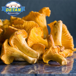 Detan Wild Chanterelle in All Types of Mushrooms