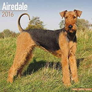 Airedale Calendar - Only Dog Breed Airedales Calendar - 2016 Wall calendars - Dog Calendars - Monthly Wall Calendar by Avonside