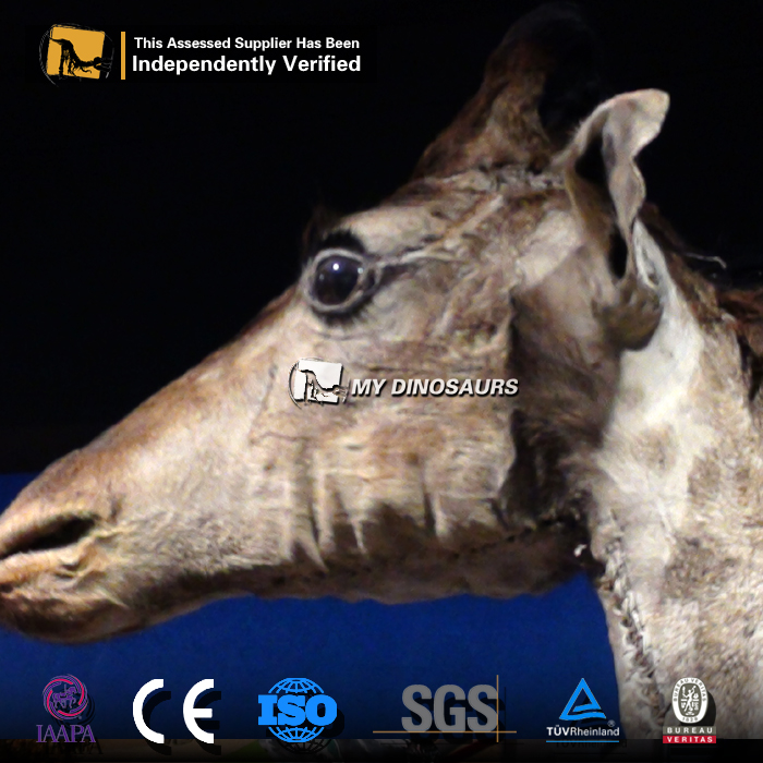 MY Dino-M22-38 High Quality Simulation Animal Giraffe For Sale
