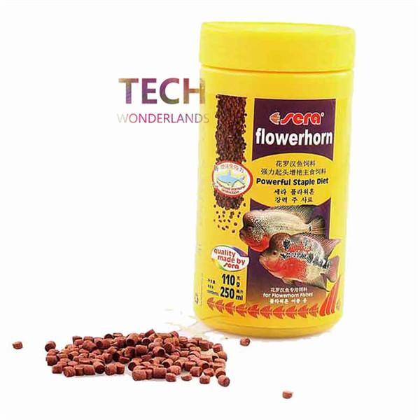 Flowerhorn Feeding..