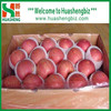 Top Quality Chinese Fresh Apple / Fresh Apple Bulk / Red Fuji Apple Price