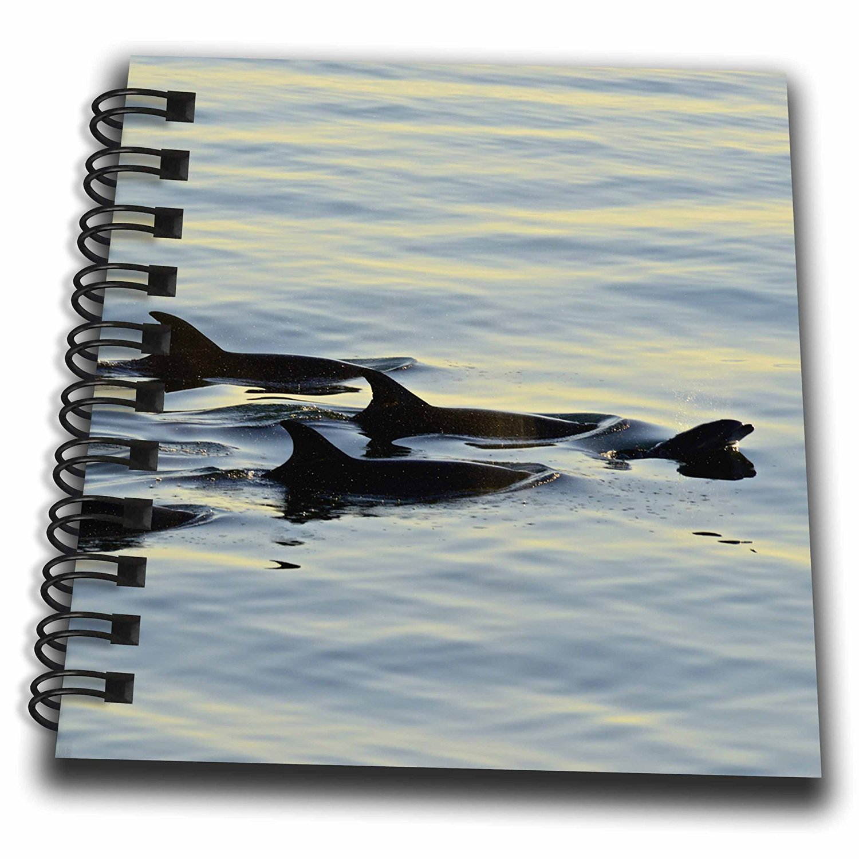 KIKE CALVO Baja California - Bottlenose dolphins, Tursiops truncatus, - Mini Notepad 4 x 4 inch (db_216078_3)