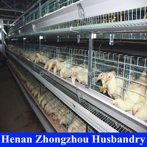 china hot selling and best quality poultry farm raw materials