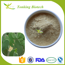 Tonking Supply High Quality Cholla Steam Extract