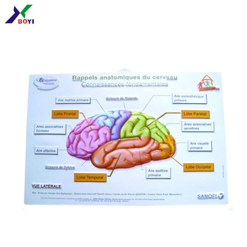Plastic Pvc Human Brain 3d Anatomical Chart Medical Educational Poster  Chart - Buy 3d Anatomical Chart,Medical Educational,Pvc Human Brain Product  on
