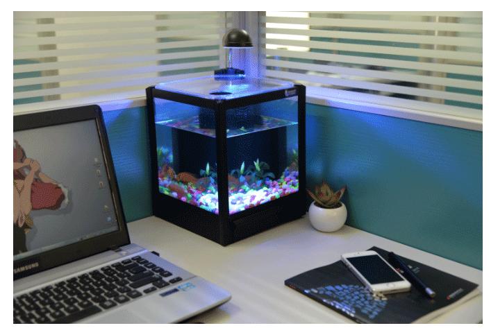 tg 09 aquarium mini aquarium dekoration in b ro familie. Black Bedroom Furniture Sets. Home Design Ideas