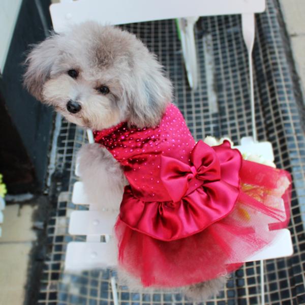 הכלב שמלות