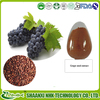 Antioxidant Women Beauty Ingredient Real Grape Seed Extract polyphenols