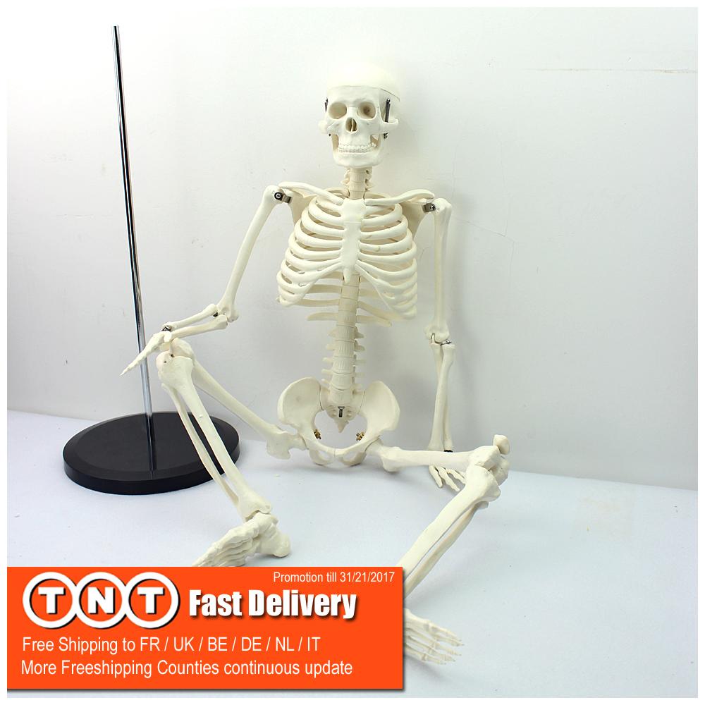 Venta al por mayor esqueleto muscular humano-Compre online los ...