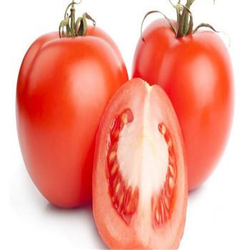 Fan Qie Natural Top Grade Greenhouse Best Exporter Of Tomato Seed - Buy  Best Exporter Of Tomato Seed,Tomato Seed,Greenhouse Best Exporter Of Tomato
