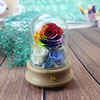 colorful rose in glass dome