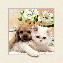Lovely cute animal art painting frame for wall decoration