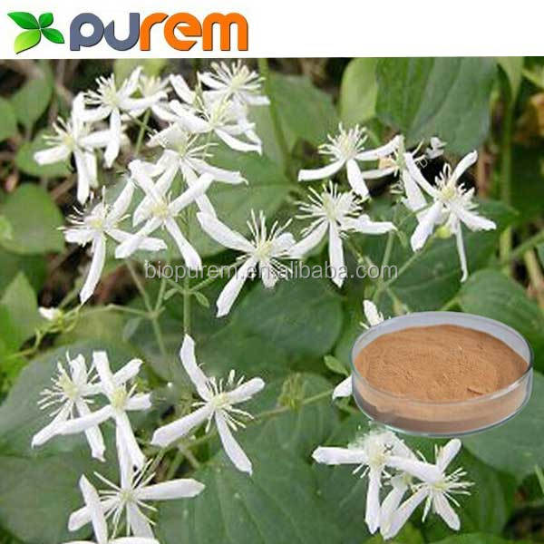 100% Natural Radix clematidis extract