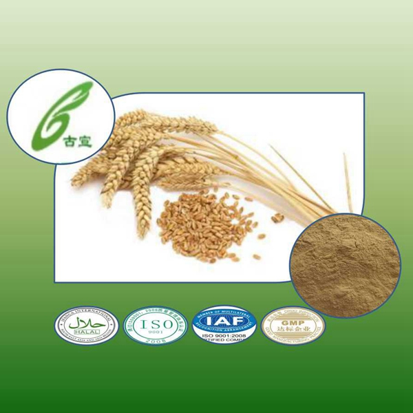 Pure Natural Barley Malt Extract Plant Extract provide external treatment