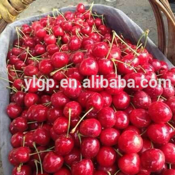 Bagged China Fresh Cherries Price Lower And High Quality - Buy Fresh  Cherries,Fresh Cherry Fruit,Fresh Cherry Peppers Product on Alibaba com