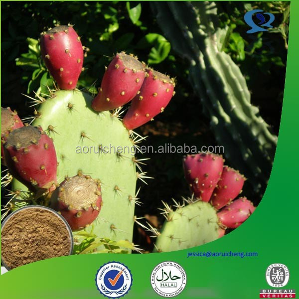 hoodia cactus extract powder, opuntia extract, dried cactus powder