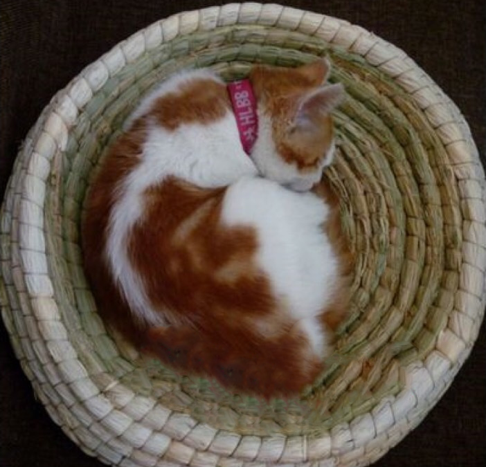 Pet Supplies Round Cat Sleeping Mat Wholesale