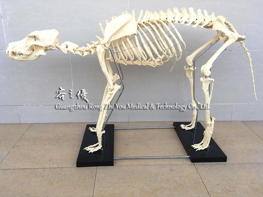 R190113 Veterinario Alimentación Animal Mascota Perro Anatomía ...