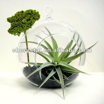 Glass Terrariumglass Hanging Ball Vase Buy Air Glass Plant