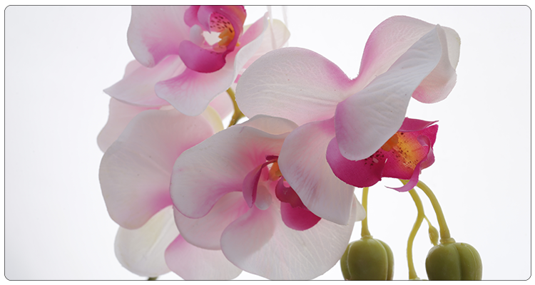 Wholesale 11 Heads Phalaenopsis Orchids Real Touch Silk Flowers Artificial