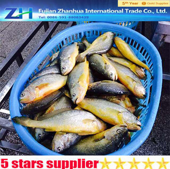 Yellow croaker korean recipe fish farm for sale yellow for Croaker fish recipe