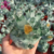 citrine quartz cluster green/yellow phantom crystal cluster home decoration
